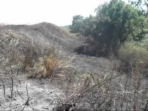 Terreni abbandonati