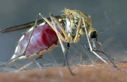 Copia di Lotta alle zanzare: a Casale i sindaci del territorio fanno il punto della situazione CorriereAl 12