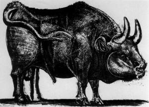 Picasso il toro