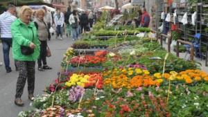 Copia di FloreAle: nel week end torna l'appuntamento di primavera nei giardini di Alessandria CorriereAl 1