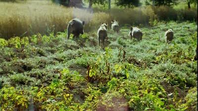 """Fornaro: """"il contenimento della fauna selvatica è fondamentale per limitare i danni ai nostri agricoltori"""" CorriereAl"""