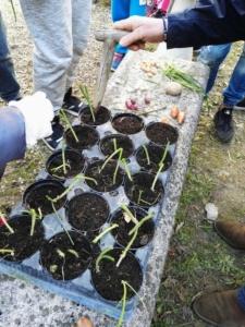 Natural… mente orto: nelle scuole alessandrine la terza fase di sperimentazione del progetto. Con il coinvolgimento di oltre 600 alunni CorriereAl