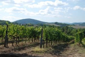 """Coldiretti: """"In molte zone della provincia vigneti e frutteti fortemente compromessi da brina e maltempo"""" CorriereAl 3"""