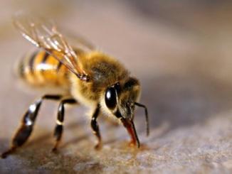 Casale Monferrato: volontari AIB di Coniolo disponibili per disinfestazione vespe e calabroni CorriereAl