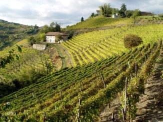 Con Slow Food alla scoperta delle cantine del Piemonte [Il gusto del territorio] CorriereAl 2