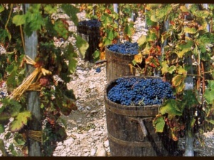 """Dora Marchi (Enosis Meraviglia): """"Una vendemmia complicata: i vini saranno da 4, o da 10"""" CorriereAl 3"""