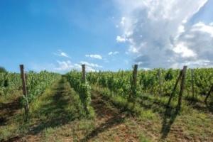 """Azienda Agricola Olivero Daniele: """"Una nuova cantina con degustazione, proprio là dove il mio bisnonno cominciò a vinificare"""" CorriereAl 2"""