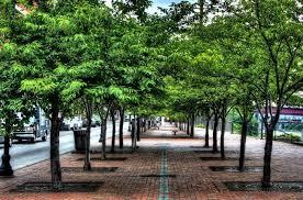 Verde e alberi miglior soluzione anti inquinamento: ad Alessandria quando lo capiremo? [Le pagelle di GZL] CorriereAl