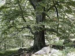 Gli alberi: un investimento in salute contro lo smog CorriereAl