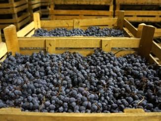 Veneto: quantità e qualità [Abbecedario del gusto] CorriereAl 2