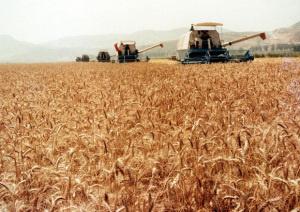 La guerra del grano, l'Europa, la pasta e il ricorso 'alessandrino' [Centosessantacaratteri] CorriereAl