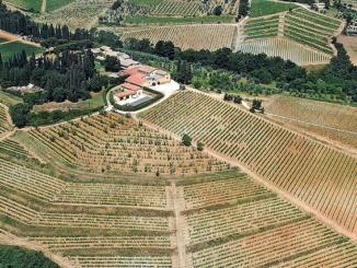 Toscana: vini-simbolo e simboli del vino [Abbecedario del gusto] CorriereAl 2
