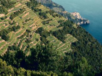 Liguria: grande storia e piccole produzioni [Abbecedario del gusto] CorriereAl